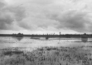 [POLESIE - krajobraz - fotografia widokowa]. 14 IX 1931. Fotografia form. 17x23,5 cm, autorstwa warszawskiego fotoreport...