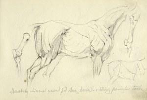 Tadeusz Rybkowski (1848-1926), Szkice muskulatury i układu kostnego konia