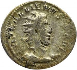 Cesarstwo Rzymskie, Galien (253-268), antoninian, Kolonia, RIC 18