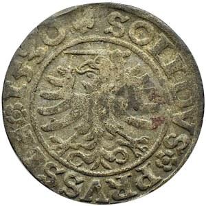Zygmunt I Stary, szeląg 1530, Toruń