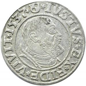 Prusy Książęce, Albrecht, grosz pruski 1537, Królewiec