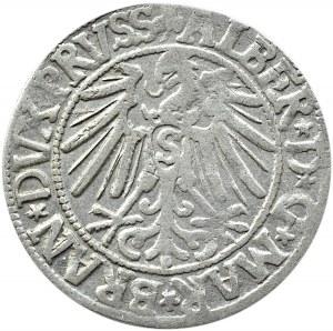Prusy Książęce, Albrecht, grosz pruski 1545, Królewiec