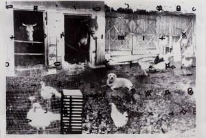 Jan Tarasin, Podwórko 1990