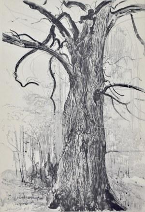 Leon Wyczółkowski (1852-1936), Lipa w nadleśnictwie Świt pod Tucholą (II)