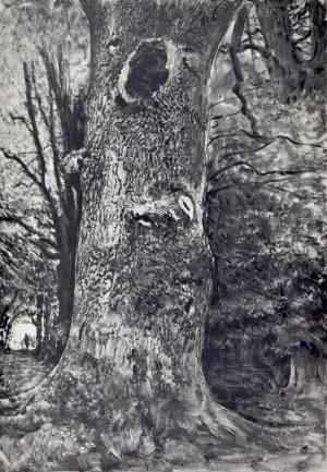 Leon Wyczółkowski (1852-1936), Dąb Wyczółkowskiego w Nowym Jasińcu pod Bydgoszczą