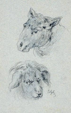 Tadeusz Rybkowski (1848-1926), Studia głów zwierzęcych