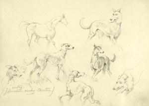 Tadeusz Rybkowski (1848-1926), Szkice konia i chartów w ruchu