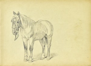 Ludwik Maciąg (1920-2007), Szkic konia