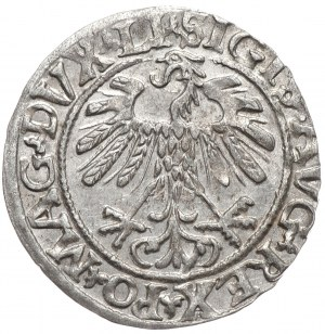 Zygmunt II August, półgrosz 1559, Wilno, LI/LITVA