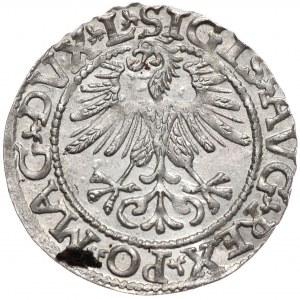 Zygmunt II August, półgrosz 1561, Wilno, L/LITV