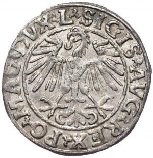 Zygmunt II August, półgrosz 1548, Wilno, L/LITVA, arabska cyfra