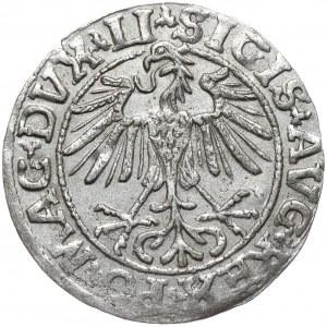 Zygmunt II August, półgrosz 1550, Wilno, LI/LITVA