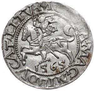 Zygmunt II August, półgrosz 1565, Wilno, L/LITV