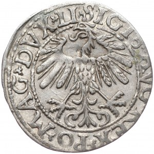 Zygmunt II August, półgrosz 1558, Wilno, LI/LITVA