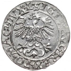 Zygmunt II August, półgrosz 1561, Wilno, L/LITVA