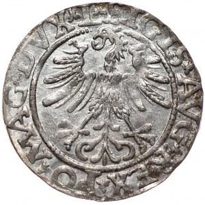 Zygmunt II August, półgrosz 1563, Wilno, L/LITV