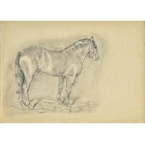 Ludwik MACIĄG (1920-2007), Szkic konia w ujęciu z prawego boku