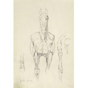 Tadeusz RYBKOWSKI (1848-1926), Szkic konia, jego muskulatury i układu kostnego