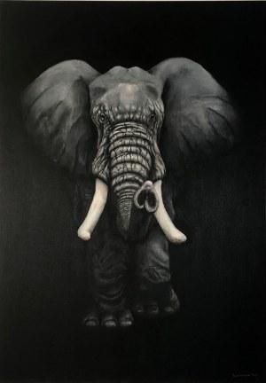 Witold Szamborski, Elephant
