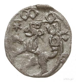 halerz po 1440 r., Opawa; Aw: W tarczy lew czeski w lew...