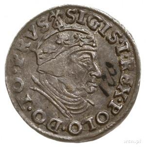 trojak 1539, Gdańsk, na awersie końcówka napisu PRVS; I...