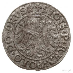 szeląg 1539, Elbląg, końcówki napisów PRVSS/ELBING; CNC...