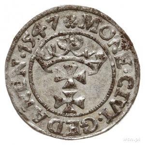 szeląg 1547, Gdańsk, gwiazdka na awersie, końcówka napi...