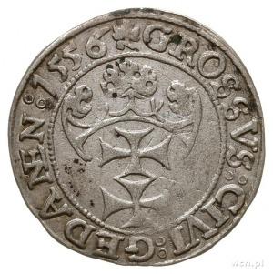 grosz 1556, Gdańsk, mała głowa króla, odmiana napisu PR...