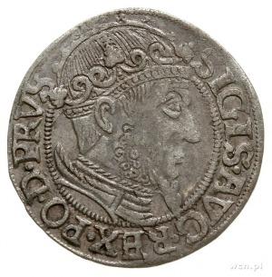 grosz 1557, Gdańsk, typ późniejszy z dużą głową króla, ...