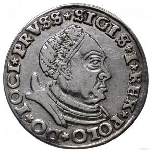 trojak 1530, Toruń; mała głowa króla w czepcu i zbroi, ...