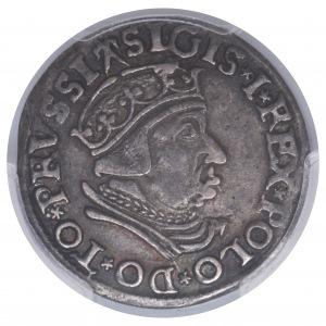 Zygmunt I Stary, trojak 1537 Gdańsk - rzadsza odmiana