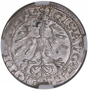 Zygmunt II August półgrosz 1564 L/LITV