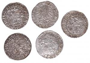 Zygmunt II August, zestaw 5 x półgrosz - różne roczniki
