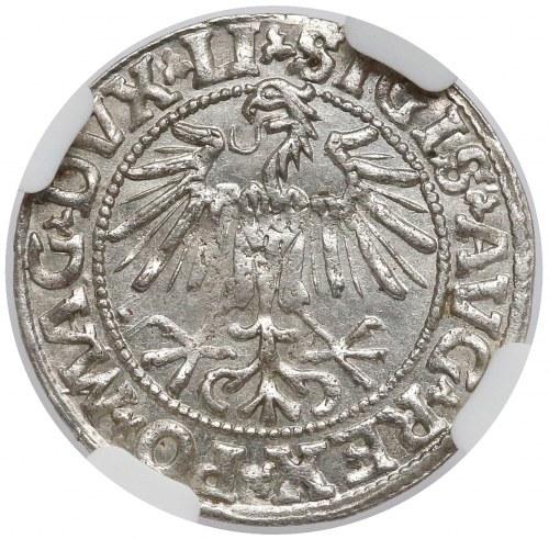 Zygmunt II August, Półgrosz Wilno 1549