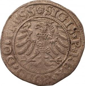 Zygmunt I Stary - szeląg 1532 - Elbląg
