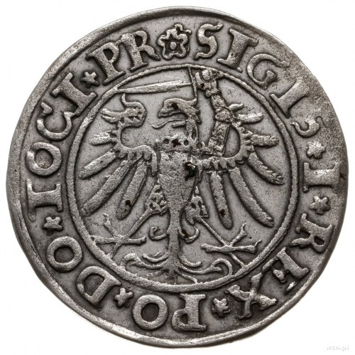 grosz 1534, Elbląg; z końcówką napisu na awersie TOCI P...