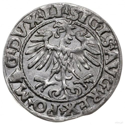 półgrosz 1554, Wilno; końcówki napisów LI/LITVA; Cesnul...