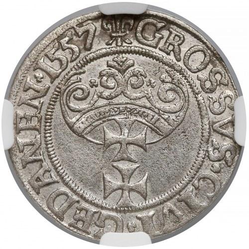 Zygmunt II August, Grosz Gdańsk 1557 - duża głowa - b. rzadka