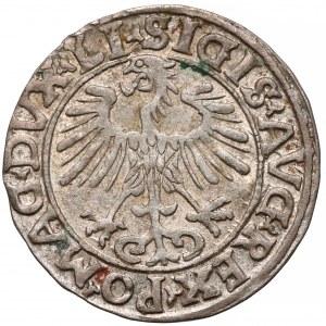Zygmunt II August, Półgrosz 1556