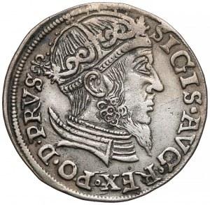 Zygmunt II August, Trojak Gdańsk 1557 - popiersie bez obwódki