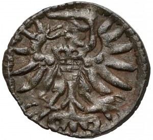 Zygmunt II August, Denar Gdańsk 1556 (R3)