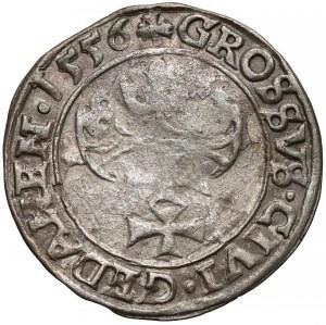 Zygmunt II August, Grosz Gdańsk 1556 - rozdwojona broda / PRVSI