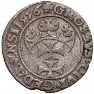 Zygmunt II August, Grosz Gdańsk 1556 - GEDANENSI