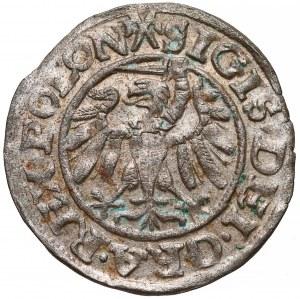 Zygmunt I Stary, Szeląg Gdańsk 1538 - ładny