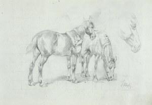 Tadeusz RYBKOWSKI (1848-1926), Pasące się konie