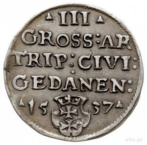 trojak 1537, Gdańsk, korona królewska bez krzyżyka i na...
