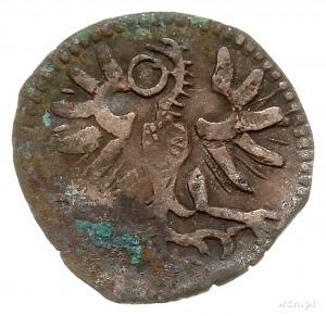denar 1589, Wschowa, Aw: Orzeł, Rw: Herb Wschowy i data...