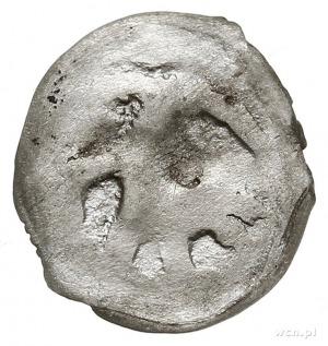 Witold 1392-1430, denar (pieniądz litewski) 1392-1394, ...