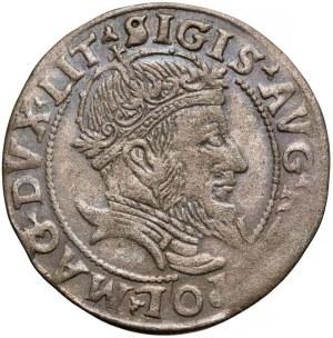 Zygmunt II August, Grosz na stopę litewską 1555 - rzadki