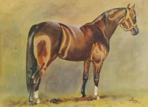 Ludwik MACIĄG (1920-2007) - według, Koń